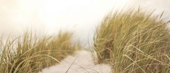 Annulé - La vie secrète des Dunes Lancieux