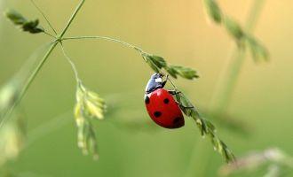 1001 pattes, le monde des insectes