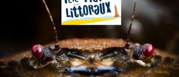 Annulé - Les Puces de Mer - Antiquités marines Lancieux