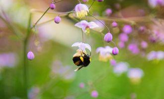 Balade nature Adopte un papillon