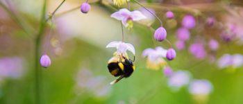 Balade nature Adopte un papillon Treffendel