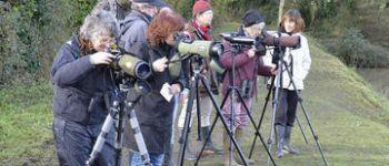 Balade ornithologique : observation des oiseaux en Rance Le Minihic-sur-Rance