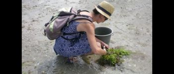 Sortie nature à la découverte des algues alimentaires Saint-Coulomb