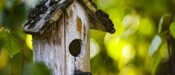 En suspens - Atelier enfant - Fabriquer une mangeoire à oiseaux Pleurtuit