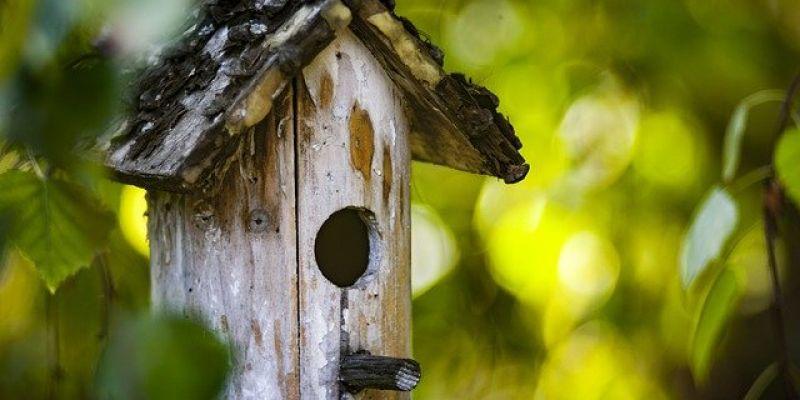 En suspens - Atelier enfant - Fabriquer une mangeoire à oiseaux