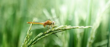 Exposition : Objectif insectes Lanvallay