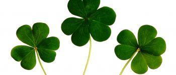 Fête Irlandaise Gouesnach