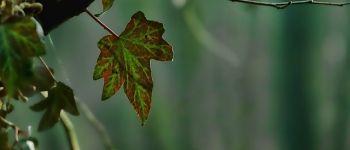 Sortie nature - La forêt, ça me branche Tréfumel