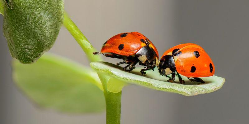 ANNULE- Sortie nature : 1001 pattes, le monde des insectes