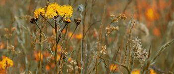 ANNULE-Sortie botanique Matignon