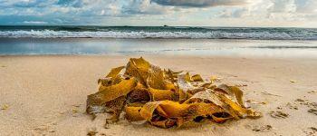 Sortie cueillette d\algues avec l\association Vit\algues Lancieux