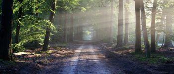 L\art est dans le bois Pleslin-Trigavou