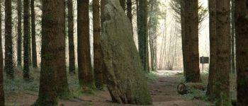 Les Mégalithes et le Menhir de l\étoile en forêts de Camors et Floranges
