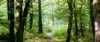 Forêt domaniale de Carnoët