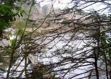 Bois de Pont Sal