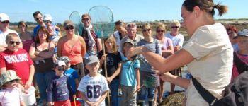 Initiation à la pêche à pied à la Trinité-sur-Mer La Trinité-sur-Mer