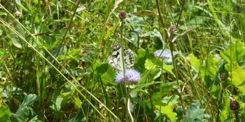 Balade nature Minute, papillon !
