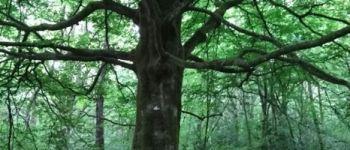 Balade créative associée à la sylvothérapie, en forêt de Brocéliande Beignon