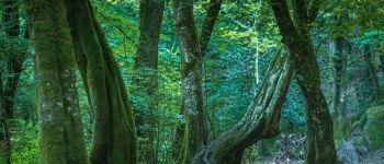 Festival International des Forêts Légendaires Concoret