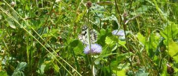 Balade nature \Minute, papillon !\ Rochefort-en-Terre
