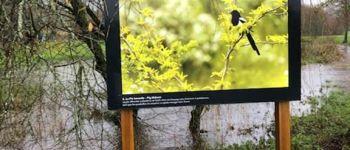 Exposition \Oiseaux du Bocage\ autour de l\étang Lauzach