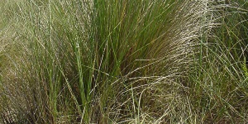 La vie secrète des dunes