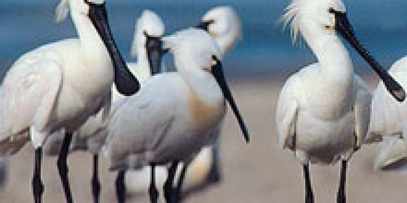 Découverte des oiseaux marins du port de Loctudy