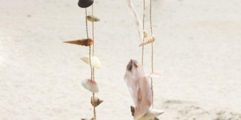 Sur la plage abandonnée... coquillages et...