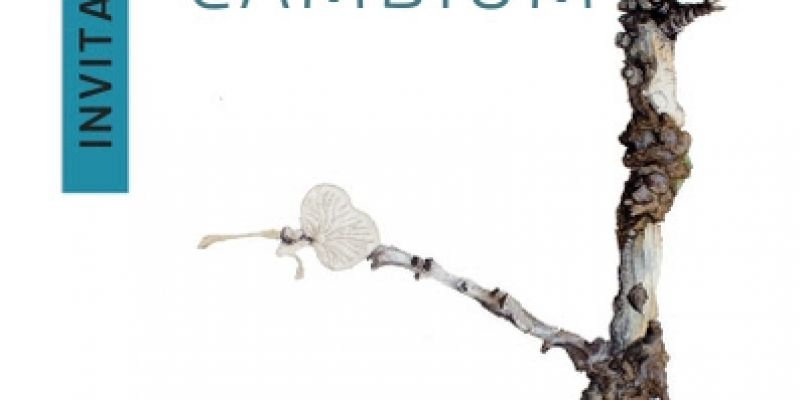 Exposition Cambium - Sylvain Le Corre