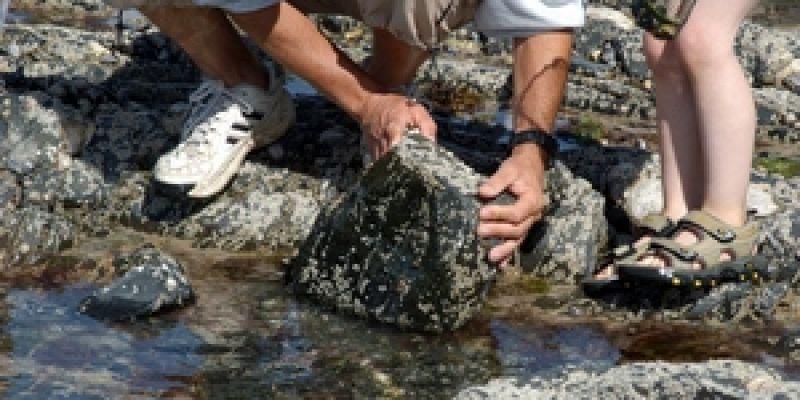 Balade découverte des animaux du bord de mer