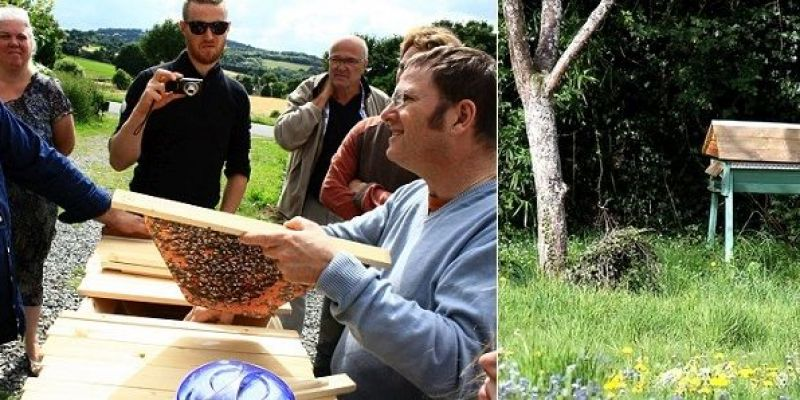 Stage : Apiculture naturelle & ruche horizontale