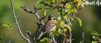 Sortie ornithologique Larmor-Plage