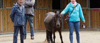 Séjours équitation à la semaine, pour les 6/15 ans sans hébergement, été 2020 à Brest Brest