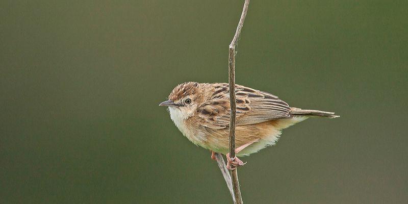Sortie ornithologique de serge kergoat : découverte des oiseaux en presquîle de crozon, les lundis, mardis, mercredis, jeudis et vendredis de loiseau