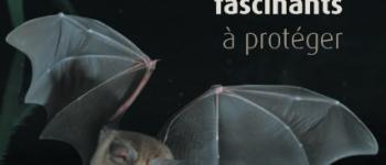 Balade au crépuscule à la découverte des chauves souris Locmaria-berrien