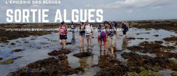 Initiation algues & atelier tartare- découverte des algues sur l\estran penhors Poudreuzic