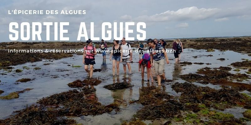 Initiation algues & atelier tartare- découverte des algues sur lestran penhors