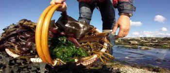 Cosmétiques phénomèn\algues ! Trégastel