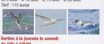 Sortie ornithologique, à la recherche des oiseaux de mer, en bateau à la journée ou en demie journée Camaret sur mer