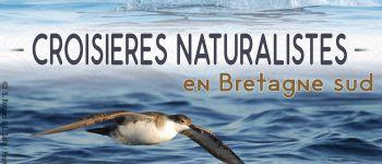 Croisière \dauphins et faune marine\ de bretagne Locmariaquer