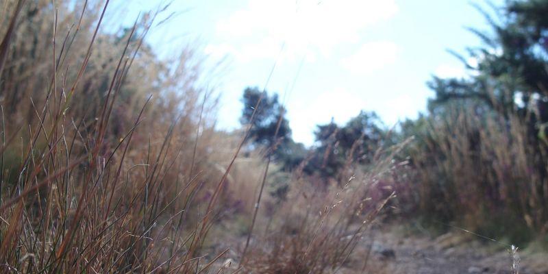 ANNULEE - Balade paysage de nos pieds vers lhorizon