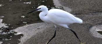 Sortie ornithologique : sur la route des migrateurs Hillion
