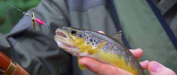 Compétition pêche à la truite. léguer street fishing, bretagne Lannion