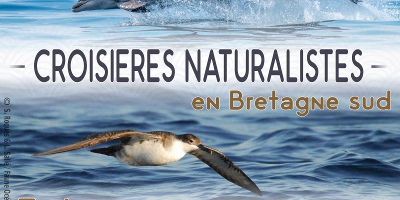 Croisière dauphins et faune marine de bretagne