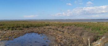 Grande collecte de déchets - Baie de Bourgneuf Les Moutiers en Retz