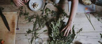 Atelier Naturo : Détox de printemps, quelles plantes les plus adaptées à votre terrain ? Nantes