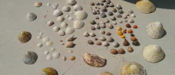 Sortie : Viens jouer avec les coquillages SAINT-PABU